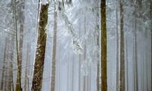Нахлува студен въздух, следобед на места ще прехвърчи сняг
