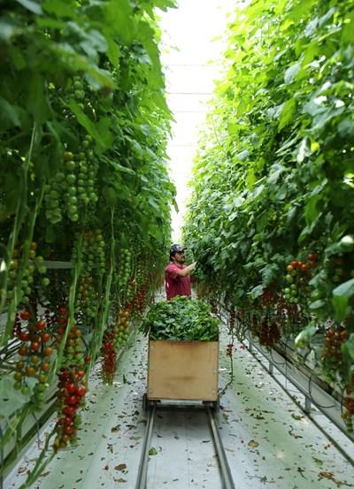 Ферма във Великобритания СНИМКА: РОЙТЕРС