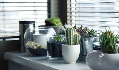 Градина: Как се размножават кактуси