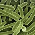Български учени разработиха система за пречистване на въздуха от вируси и бактерии