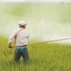 Според проучване, публикувано миналата година в списанието BMC Public Health, 385 милиона фермери и селскостопански работници по света са натровени от пестициди всяка година и приблизително 11 000 души умират