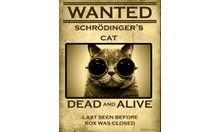Дива котка на Шрьодингер. Особени белези - не се поддава на никакви закони!