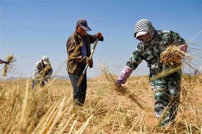 Китай ускорява борбата с опустиняването