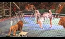 Лъв атакува дресьора си