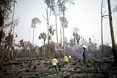 Бразилски огнеборци оглеждат щетите, нанесени от мащабните горски пожари на обезлесените територии от амазонската джунгла.