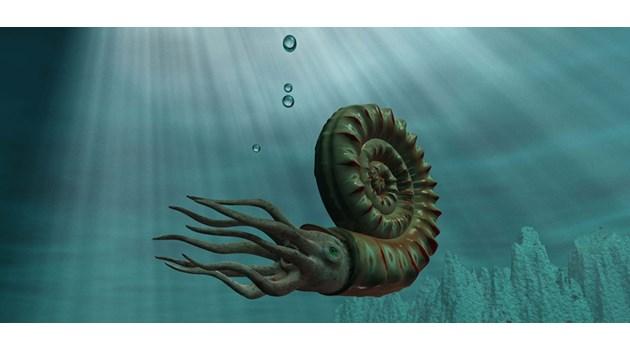 Защо някои видове оцеляват стотици милиони години?