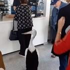 Пеликан посети ресторант на самообслужване, нареди се на опашка