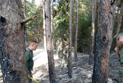 Борбата с огъня в Старосел Снимки: МО