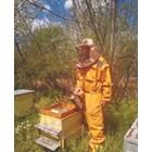 В 15-годишния опит като пчелар на Недялко Радев, няма случай на толкова масов мор при пчелите като тазгодишния.