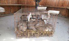 Задържаха трима мъже, крали зайци в Търговище
