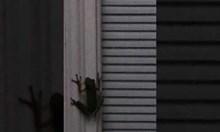 Светулка в търбуха на жаба