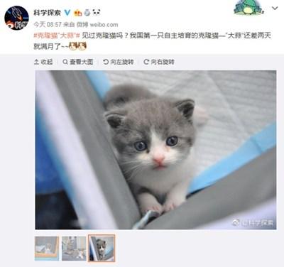 Първата клонирана котка в Китай вече факт