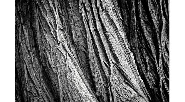 Горски преследват бракониер на дърва в Монтанско