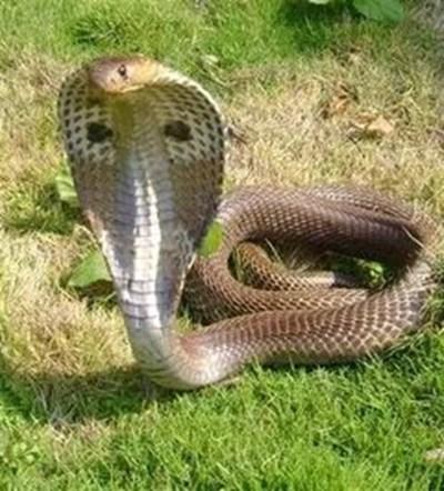Мъж гледа опасни змии, съседите му вдигнаха на крак екоинспекторите