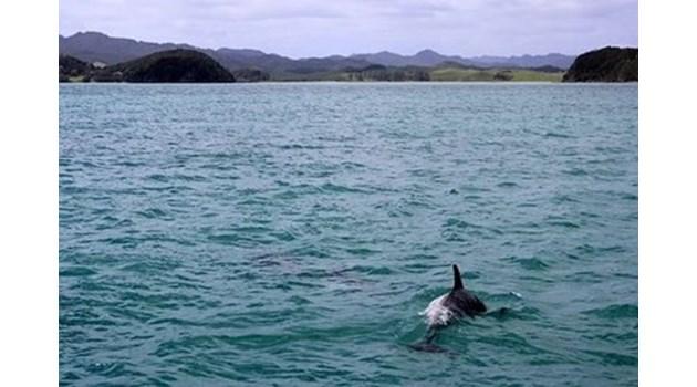 Възпитаник на Американския колеж бе първият убит в студената война с делфини