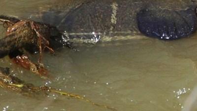 Деца откриха мъртва жена в канал във Врачанско