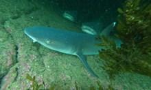 Докосване до животинския рай на островите Галапагос (Галерия)