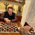 Как прекарва самоизолацията Шварценегер - с уиски, шах и магаре