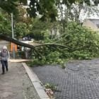 Паднало дърво Снимка: Архив