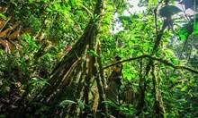Ходещи палми, кръстоска между папагал и змия във флората и фауната