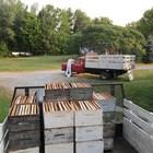 Допълнителен източник на доходи за пчеларите е отдаването под наем на пчелите за опрашване на различните култури.