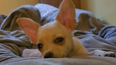 Кучето Рая