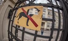 Във всички изборни секции е забранено за кучета
