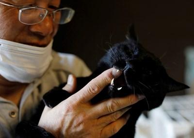 Сакае Като дели дома си с 41 изоставени домашни любимци.   СНИМКА: РОЙТЕРС