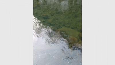 Гражданин е заснел умряла риба в Чая