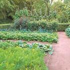 Митове и факти в градината
