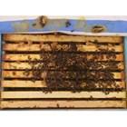 Даването храна на пчелите през есенно-зимния сезон в каквато и да е форма им вреди в няколко направления. Защото от пълен покой те инстинктивно веднага минават в активно състояние.