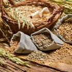 Раздвижва се търговията със зърно на Софийската стокова борса