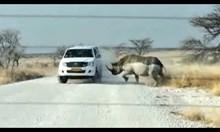 Разрушителната сила на най-големите животни