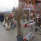 """Разсадници от цялата страна предлагат на """"Агра2020"""" в Пловдив разнообразни овощни и ягодоплодни видове, лози, както и декоративни растения.              Снимка: Ваня Велинска"""