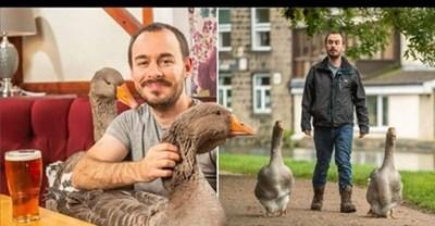 Свен Кърби с гъските си Колаж: Фейсбук/Kat Brewer и change.org
