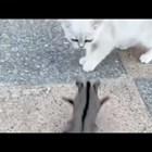 Катеричка опитомява коте