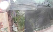 Домашна оранжерия за марихуана разкриха в село до Пазарджик