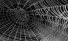 Учени: Паяжината е 5 пъти по-здрава от стоманен кабел със същото тегло