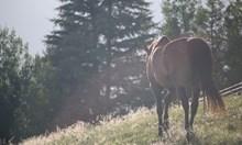 Полицаи спряха нелегална сделка с коне във Вършец