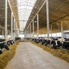 Светлината в обора - как да я оптимизираме за постигане на повече мляко?