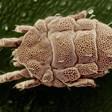 В Южен Китай откриха най-древните паразити на Земята