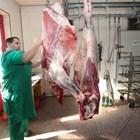 У нас се произвежда висококачествено говеждо месо. И ако секторът се развива правилно, може да си върнем загубените пазари като Гърция, Италия, Ливан, Алжир, Сирия и Йордания Снимки Андрей Белоконски