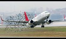 Птици срещу самолети