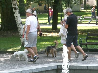 Собствениците на домашни любимци в Пловдив ще могат да си поемат въздух - няма да бързат за 7 дни да регистрират кучетата си.