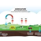 Досегашните политики карат фермерите да стават по-големи и по-големи, по-индустриализирани, е позицията на Greenpeace Europe
