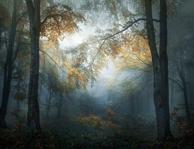 """Печелившата фотография на Веселин Атанасов """"Ранна есен"""" е заснета в горите на Стара планина."""