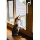 Котета, които рано са отделени от майка си, развиват тревожност от раздяла Снимка: PxHere