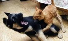 Игра на куче и котка