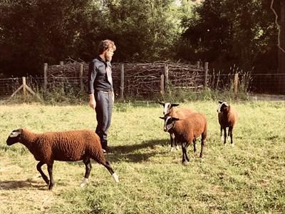 На овчаря Дейвид често се налага да пасе животните си по риза и вратовръзка, директно след работа в училището. СНИМКА: Авторът