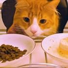В никакъв случай не изхранвайте едновременно суха и натурална храна Снимка: YouTube